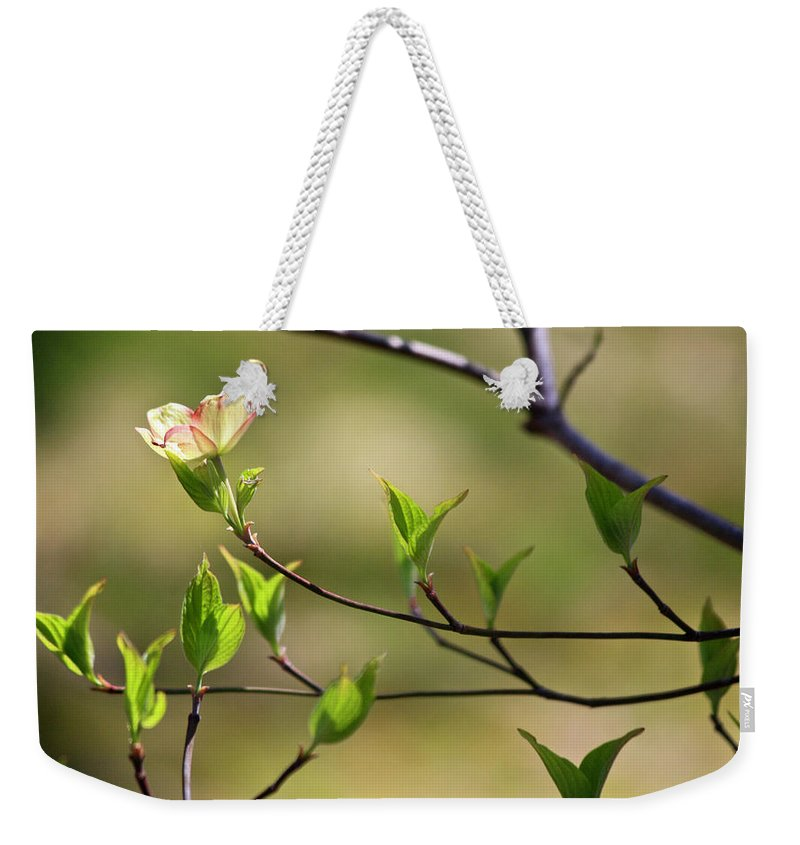 Dogwood Weekender Tote Bag featuring the photograph Solitary Dogwood Bloom by Teresa Mucha