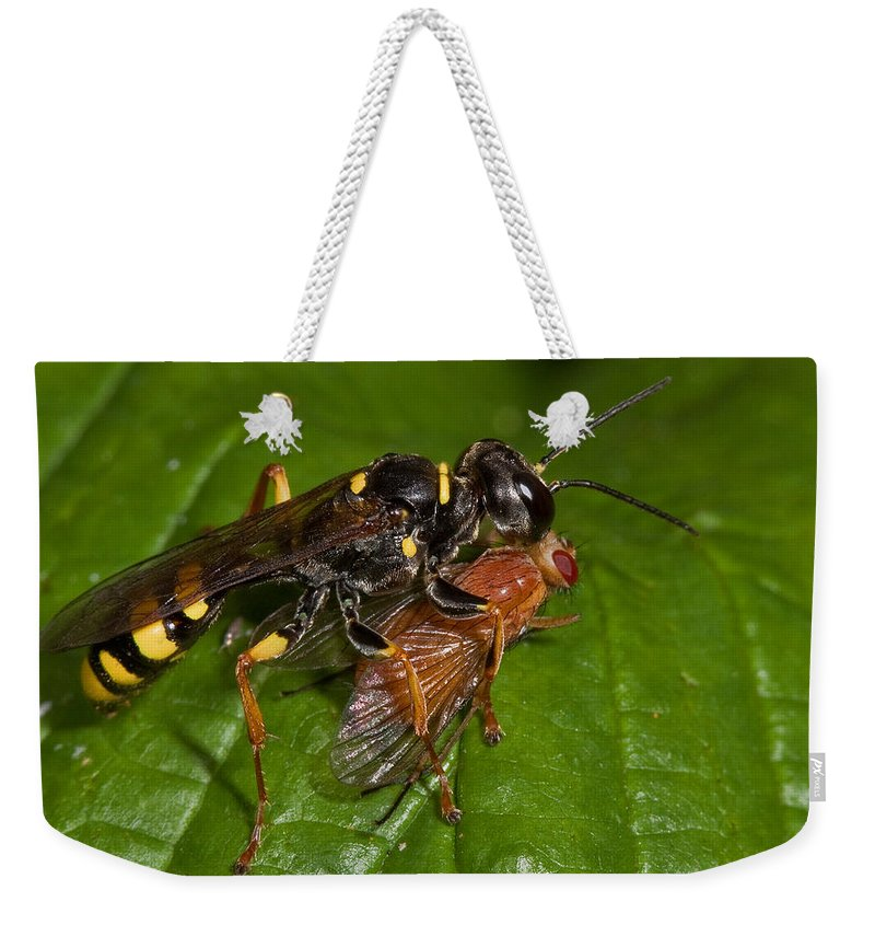 Solitary Wasp Weekender Tote Bag featuring the photograph Solitary Wasp by Bob Kemp
