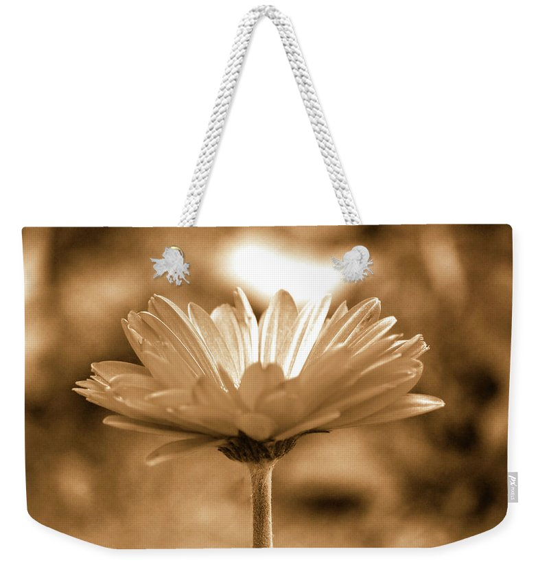Daisy Weekender Tote Bag featuring the photograph Some Shine by Lori Tambakis