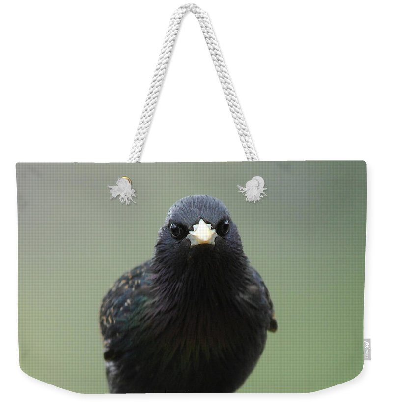 Bird Weekender Tote Bag featuring the photograph Somebody's Watching by Donna Blackhall