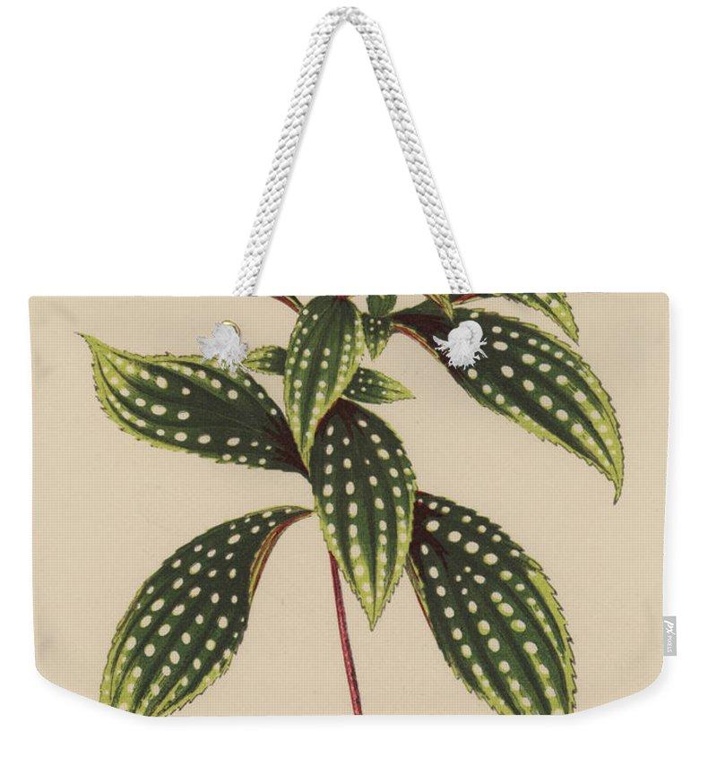 Sonerila Margaritacea Weekender Tote Bag featuring the painting Sonerila Margaritacea by English School
