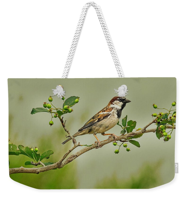 Wildlife Photography Weekender Tote Bag featuring the photograph Song Sparrow by John Bartelt