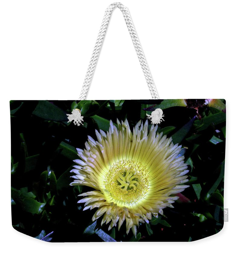 South Weekender Tote Bag featuring the photograph South African Flower 1 by Douglas Barnett