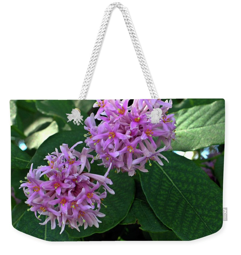 South Weekender Tote Bag featuring the photograph South African Flower 2 by Douglas Barnett