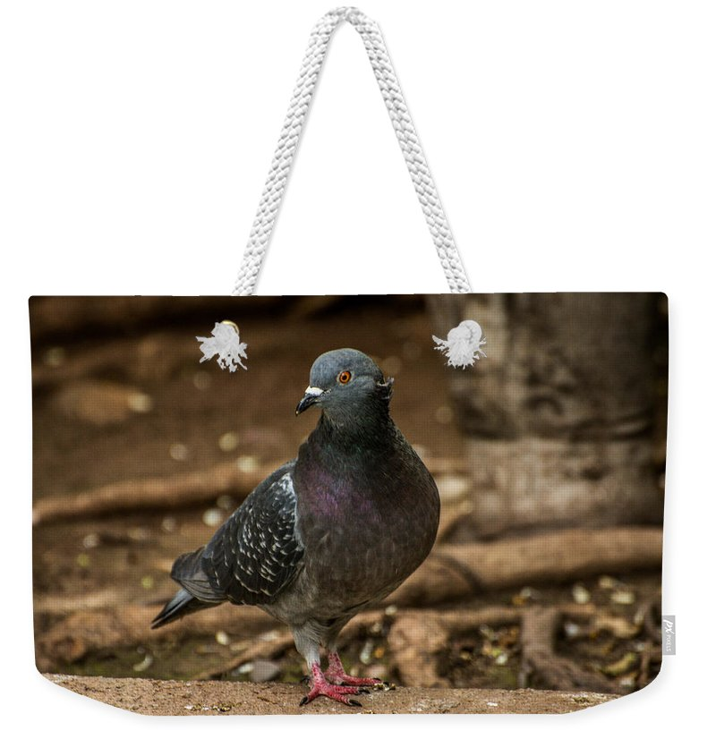 Bird Weekender Tote Bag featuring the photograph South American Pigeon by Constance Puttkemery