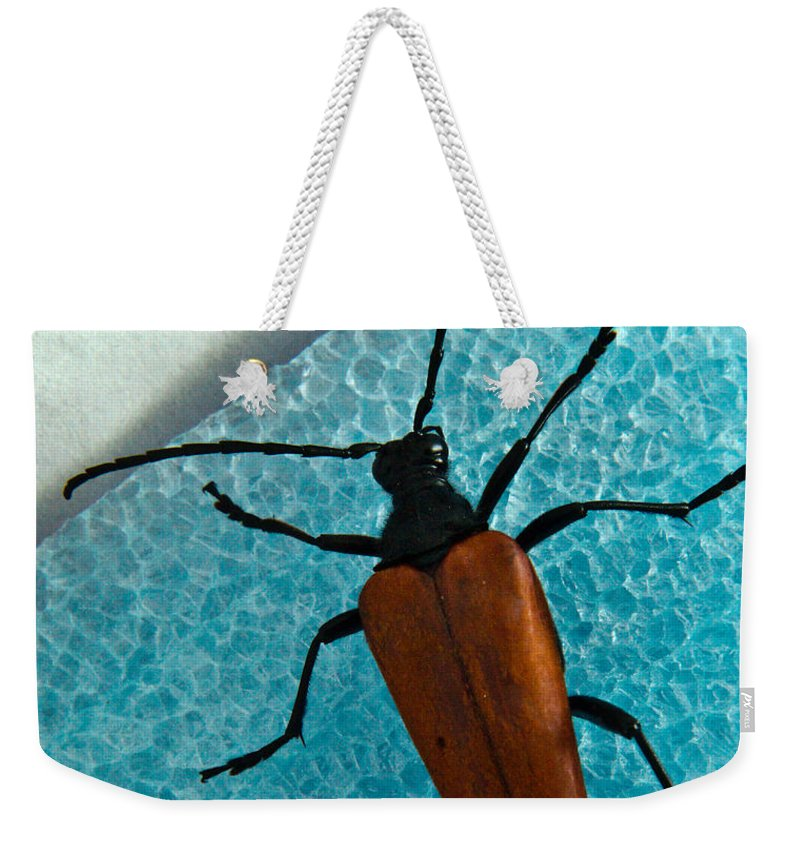 Cumberland Weekender Tote Bag featuring the photograph Space Age Beetle by Douglas Barnett