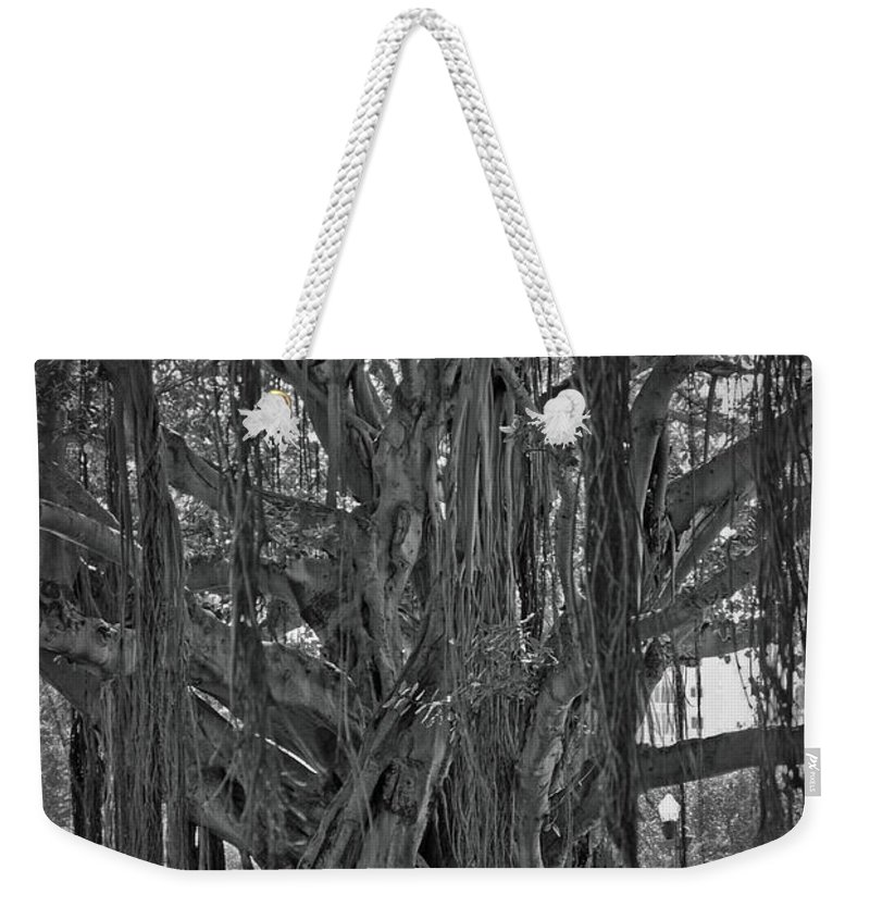 Spanish Weekender Tote Bag featuring the photograph Spanish Moss Of The Tree by Jost Houk