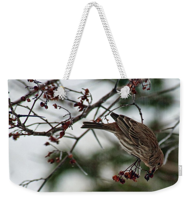 Bird Weekender Tote Bag featuring the photograph Sparrow Eating Berry by David Arment