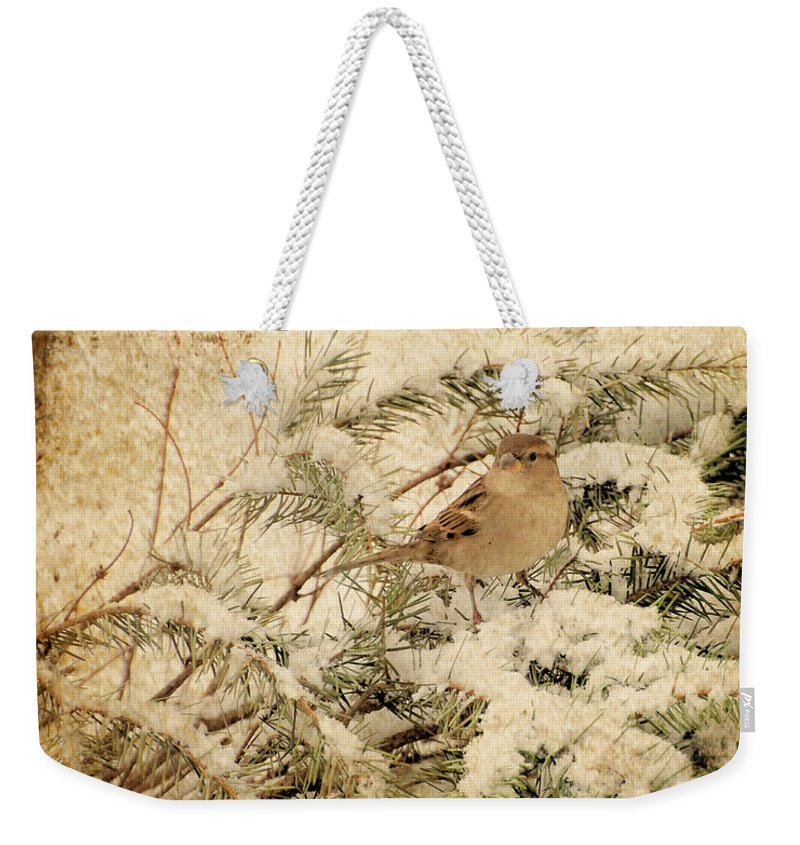 Bird Weekender Tote Bag featuring the photograph Sparrow In Winter I - Textured by Angie Tirado