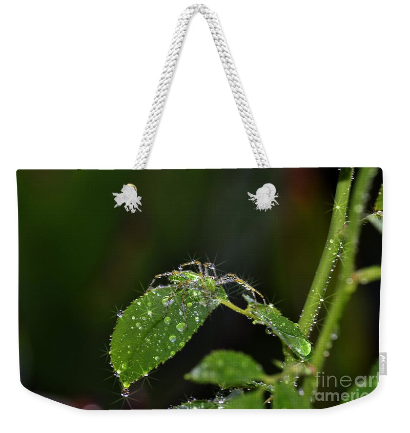 Clay Weekender Tote Bag featuring the photograph Spider And The Shower by Clayton Bruster