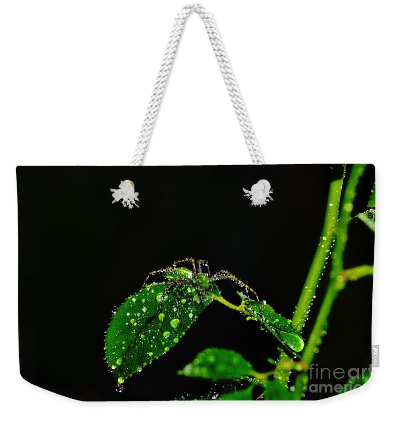 Clay Weekender Tote Bag featuring the photograph Spider In The Shower by Clayton Bruster