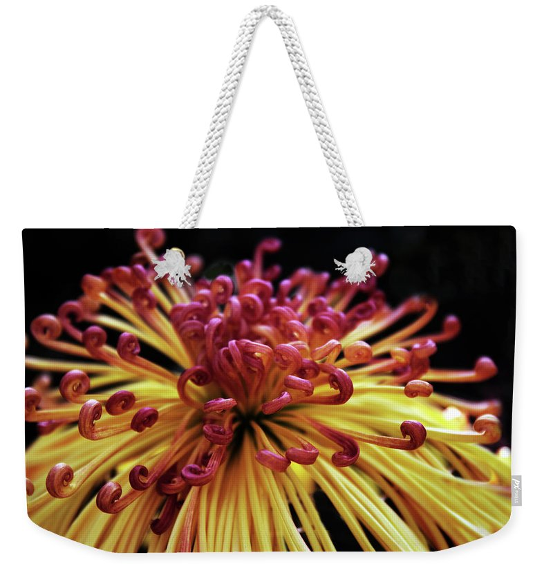 Chrysanthemum Weekender Tote Bag featuring the photograph Spider Chrysanthemum by Jessica Jenney