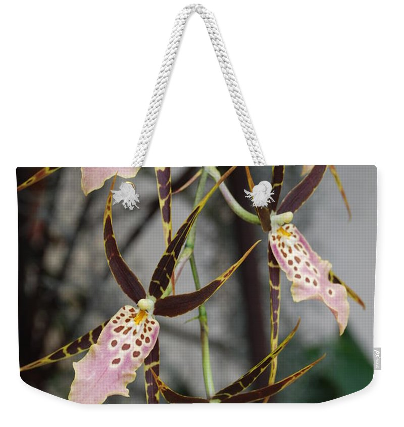 Pink Weekender Tote Bag featuring the photograph Spider Orchids by Rob Hans