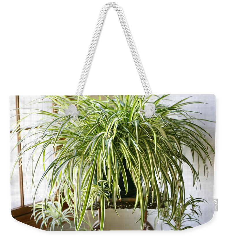 Spider Plant Weekender Tote Bag featuring the photograph Spider Plant by Marilyn Hunt
