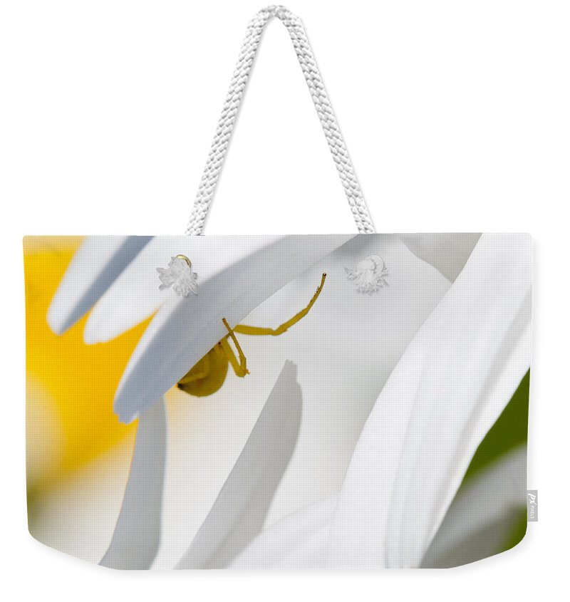 Astoria Weekender Tote Bag featuring the photograph Spiderland by Robert Potts