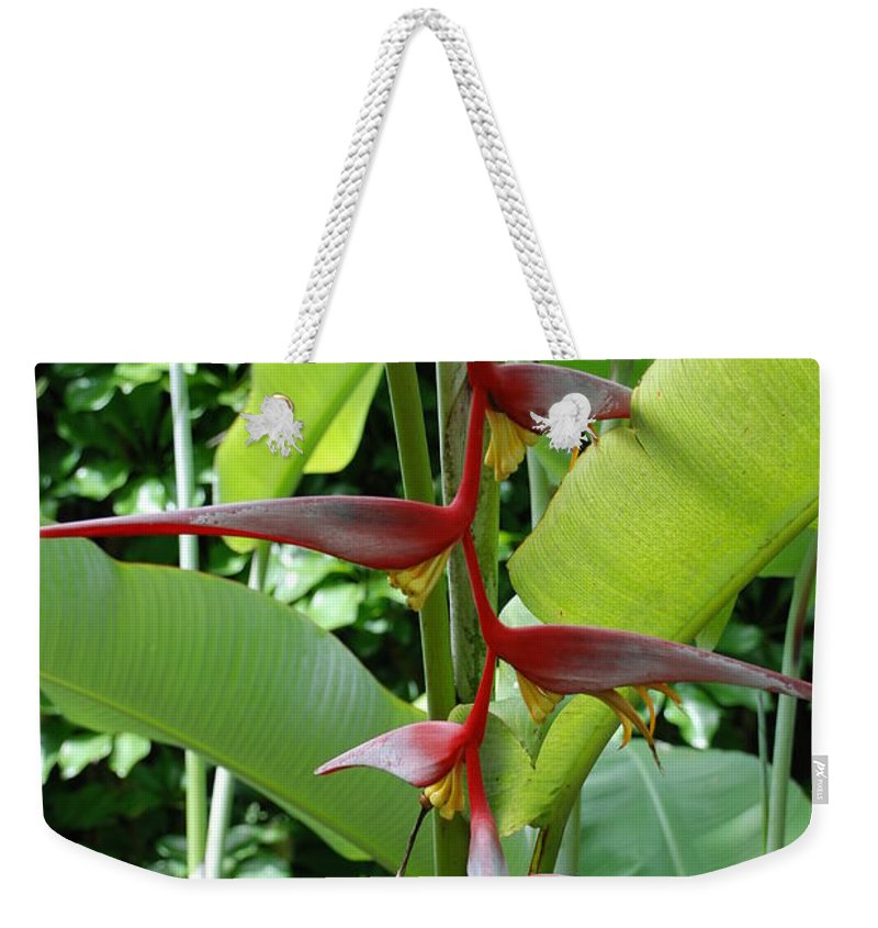 Macro Weekender Tote Bag featuring the photograph Spike Tree by Rob Hans