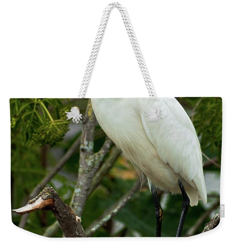 Bird Weekender Tote Bag featuring the photograph Spiked by Christopher Holmes