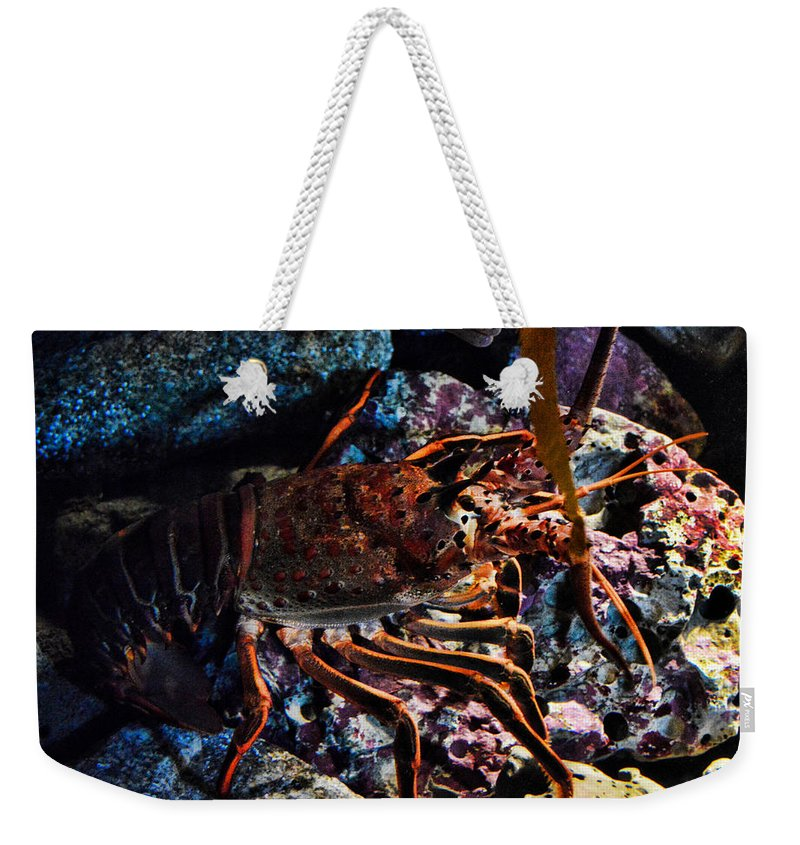 Eel Weekender Tote Bag featuring the photograph Spiney California Lobster by Tommy Anderson