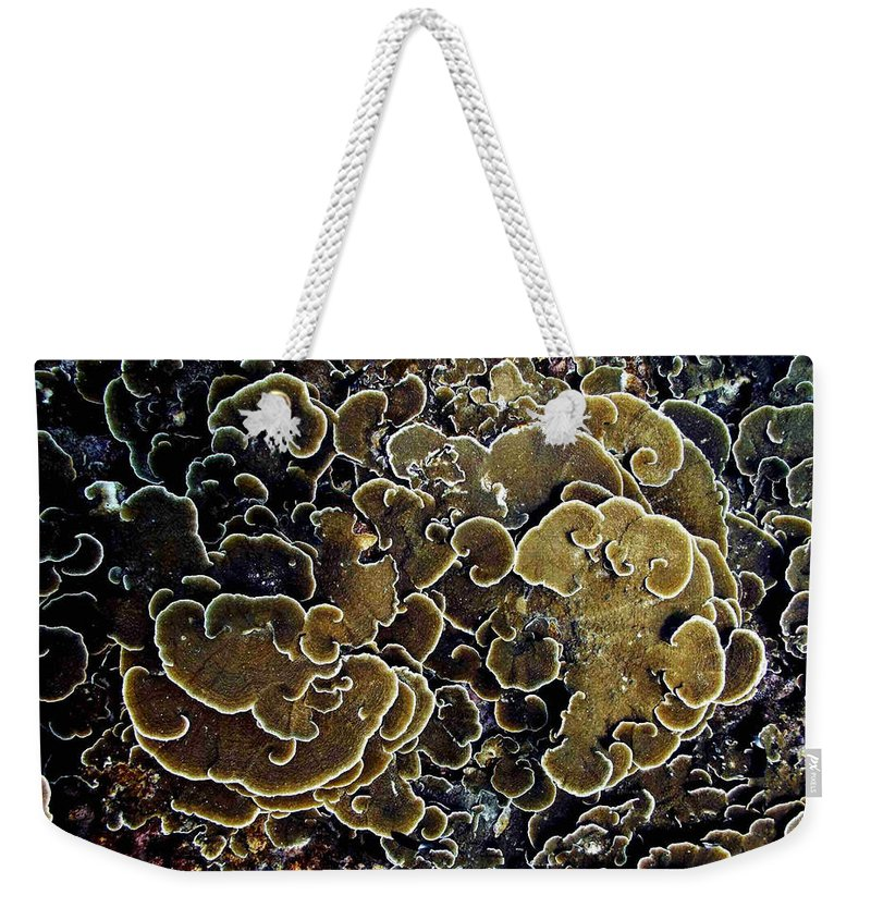 Corals Weekender Tote Bag featuring the photograph Spirals In Corals by Dragica Micki Fortuna