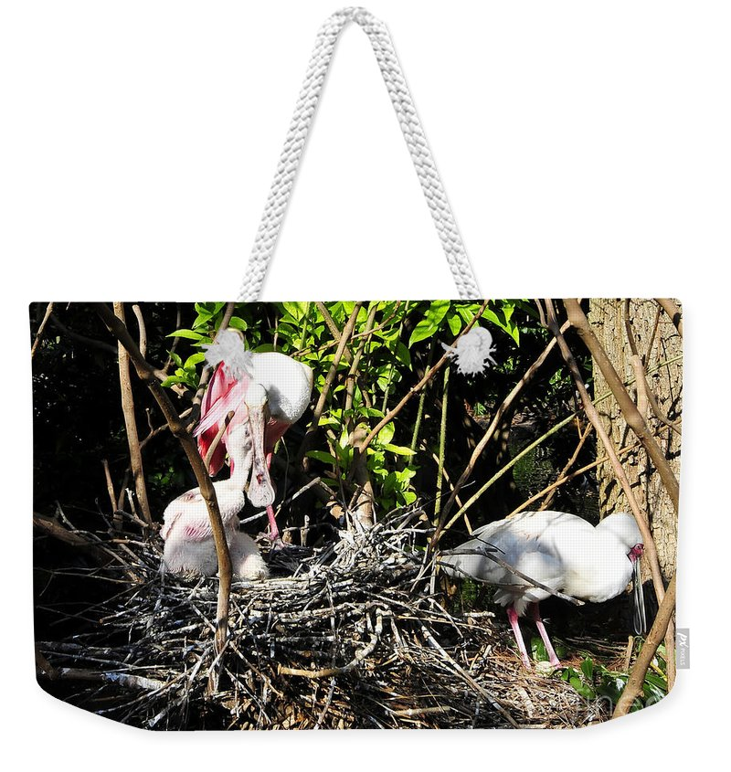 Spoonbill Weekender Tote Bag featuring the photograph Spoonbill Family by David Lee Thompson