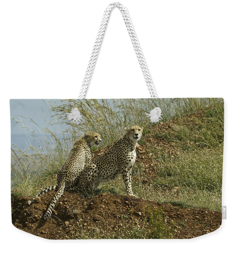Africa Weekender Tote Bag featuring the photograph Spotted Cats by Michele Burgess
