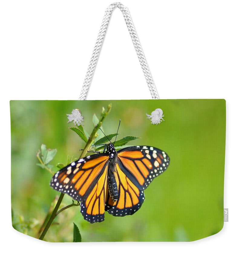 Butterfly Weekender Tote Bag featuring the photograph Spread Your Wings by Bill Cannon