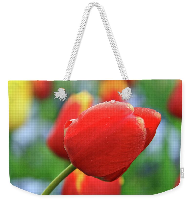 Flowers Weekender Tote Bag featuring the photograph Spring Again by Scott Mahon