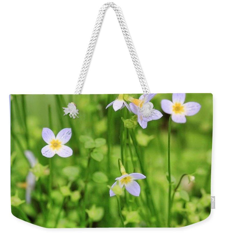 Flowers Weekender Tote Bag featuring the photograph Spring Beauties by Shari Jardina