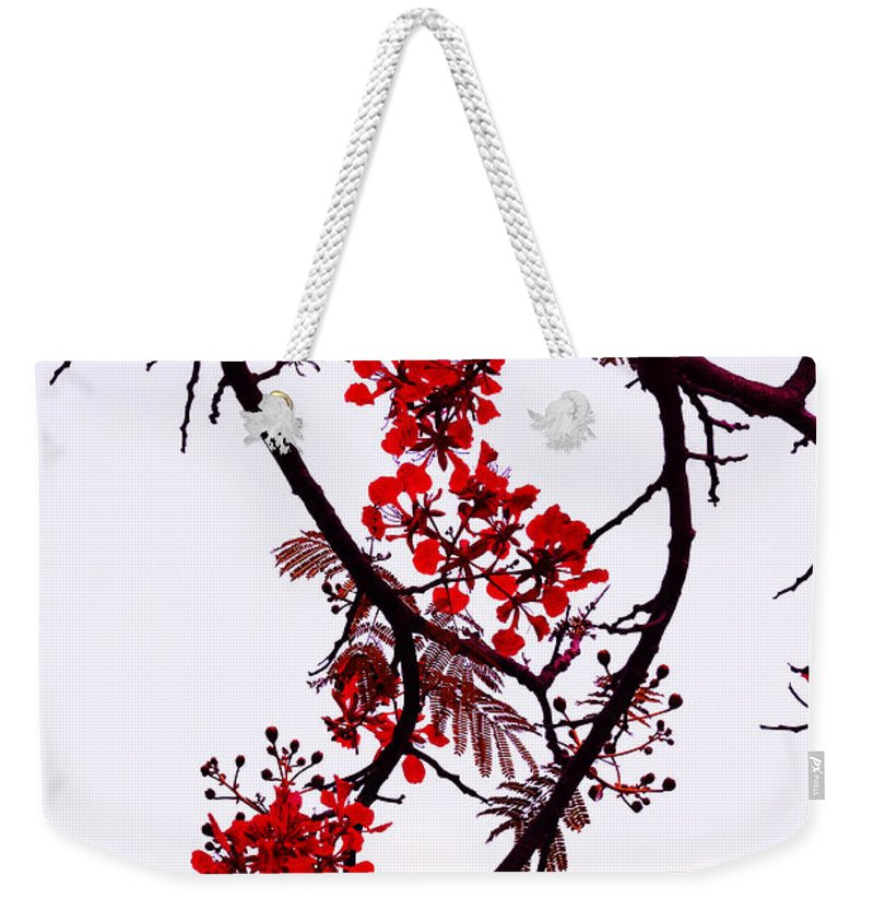 Jenny Rainbow Fine Art Photography Weekender Tote Bag featuring the photograph Spring Blossom In Maldives. Flamboyant Tree by Jenny Rainbow