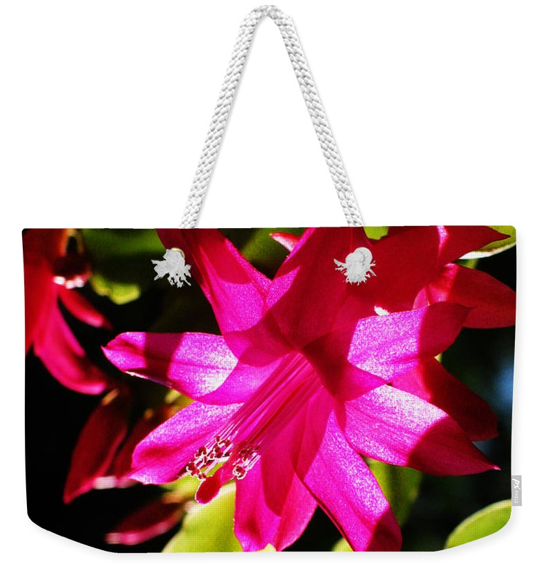 Cactaceae Weekender Tote Bag featuring the photograph Spring Blossom 15 by Xueling Zou