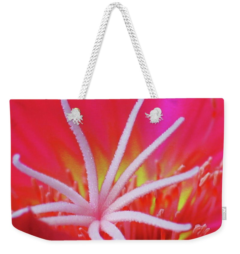 Echinocereus Weekender Tote Bag featuring the photograph Spring Blossom 19 by Xueling Zou