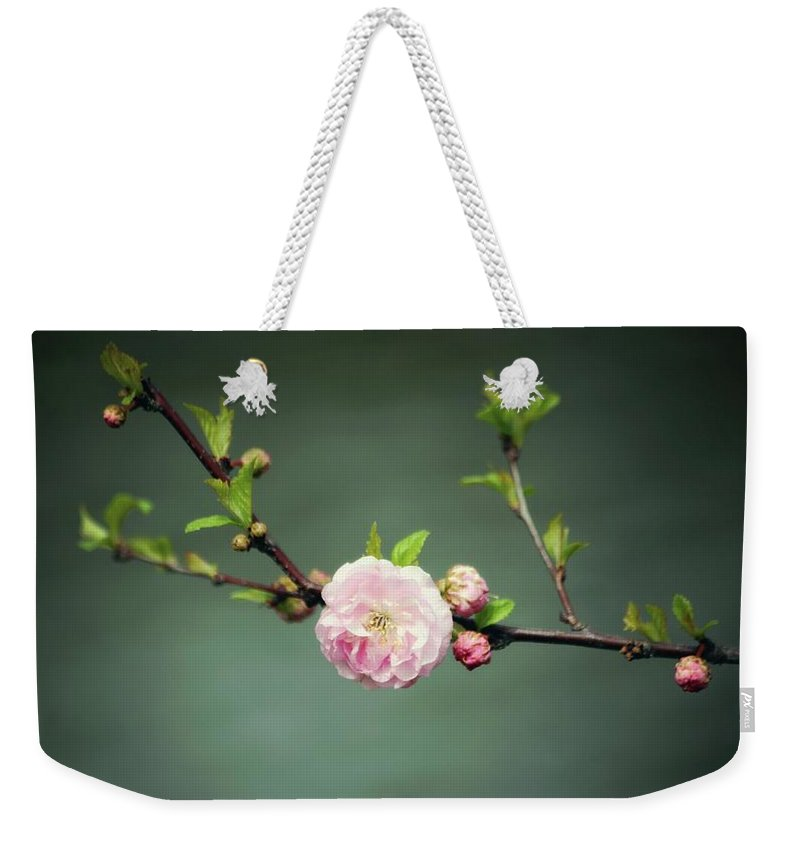Spring Blossom Weekender Tote Bag featuring the photograph Spring Blossom by Kara Heniges