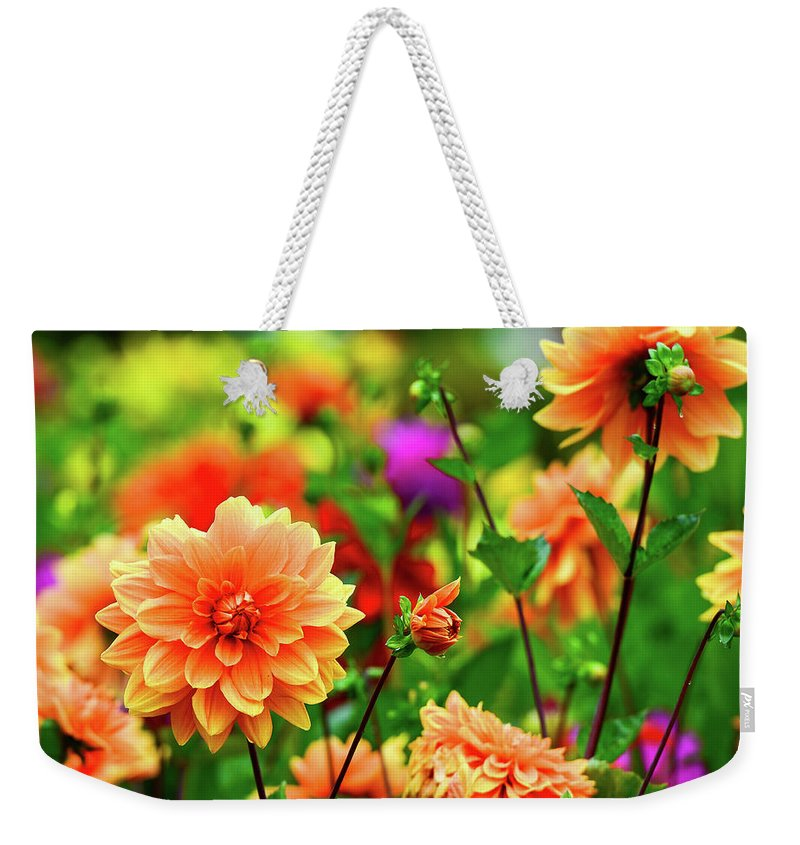 Flowers Bloom Garden Dahlias Dahlia Colorful Weekender Tote Bag featuring the photograph Spring Bouquet by Clyn Robinson