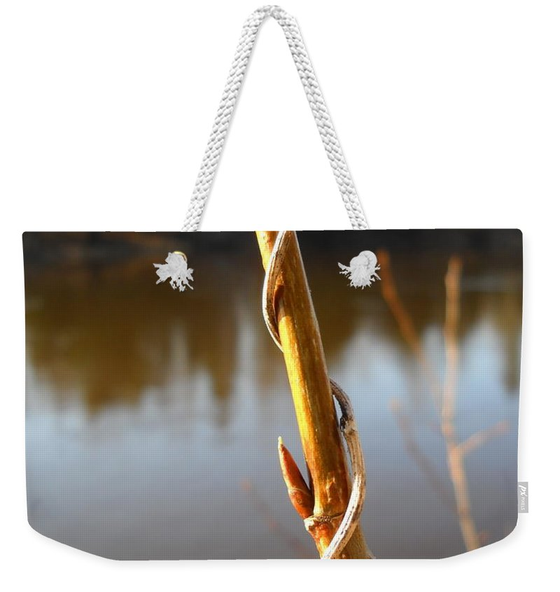 Sapling Weekender Tote Bag featuring the photograph Spring Bud On Balm Of Gilead Stem by Kent Lorentzen