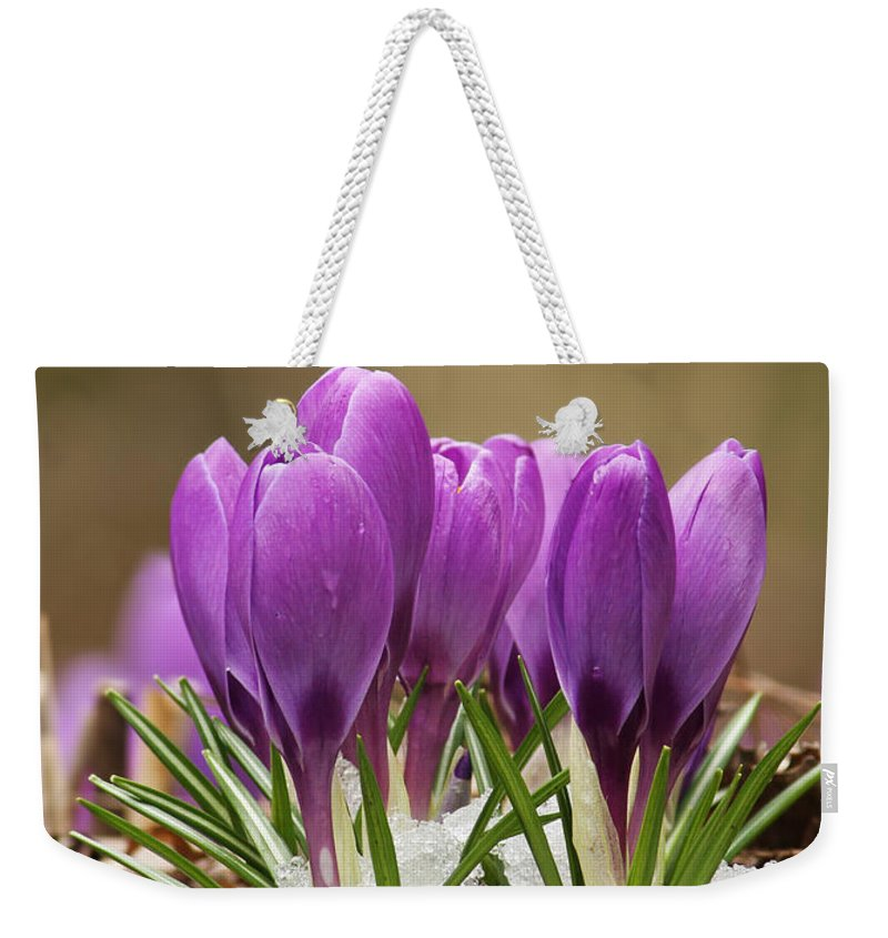 Spring Weekender Tote Bag featuring the photograph Spring Crocus by Mircea Costina Photography