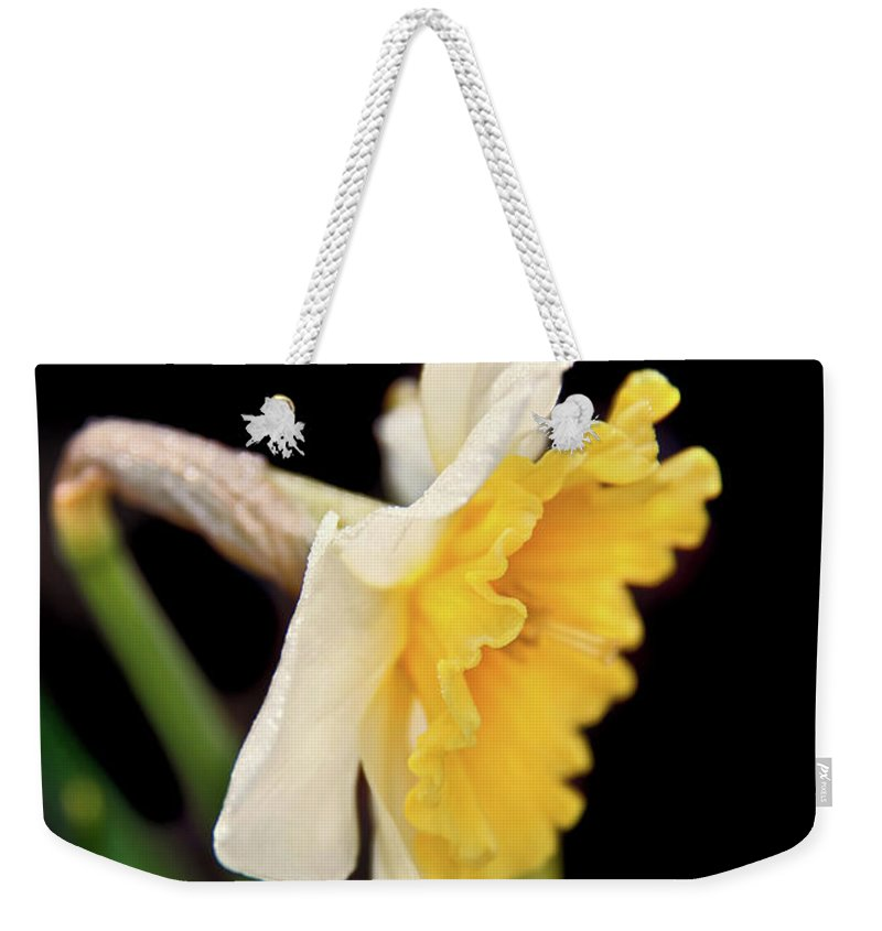 Daffodil Weekender Tote Bag featuring the photograph Spring Daffodil Flower by Jennie Marie Schell
