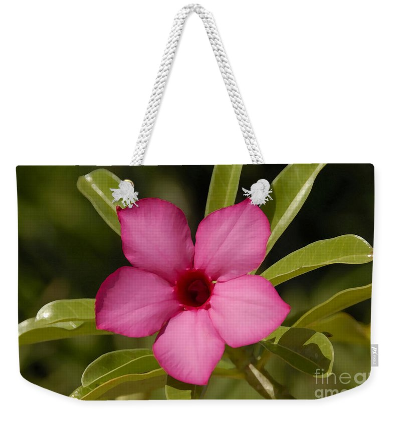 Spring Weekender Tote Bag featuring the photograph Spring by David Lee Thompson