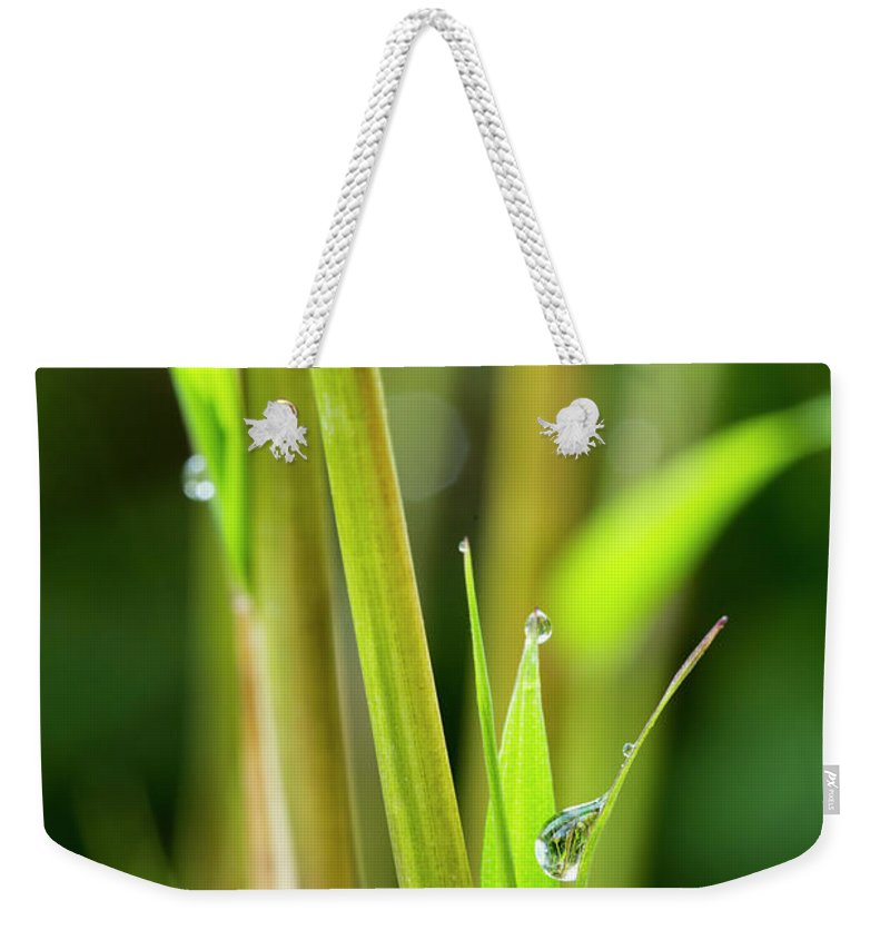 Bamboo Weekender Tote Bag featuring the photograph Spring Droplets by Photopoint Art