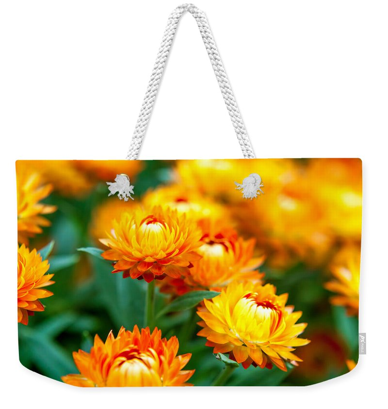 Spring Flowers Weekender Tote Bag featuring the photograph Spring Flowers In The Afternoon by Az Jackson
