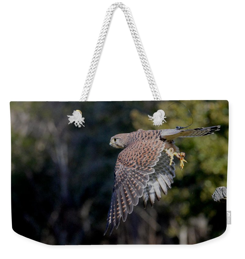 Eurasian Kestrel Weekender Tote Bag featuring the photograph Spring Forward by Erin O'Neal-Morie