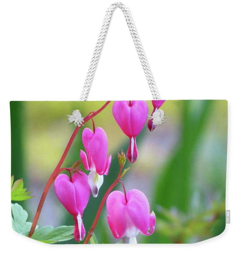 Bleeding Heart Weekender Tote Bag featuring the photograph Spring Hearts - Flowers by MTBobbins Photography