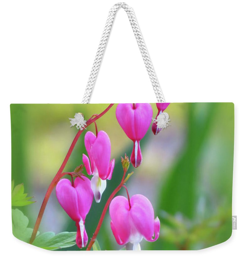 Bleeding Heart Weekender Tote Bag featuring the photograph Spring Hearts - Flowers With Vignette by MTBobbins Photography