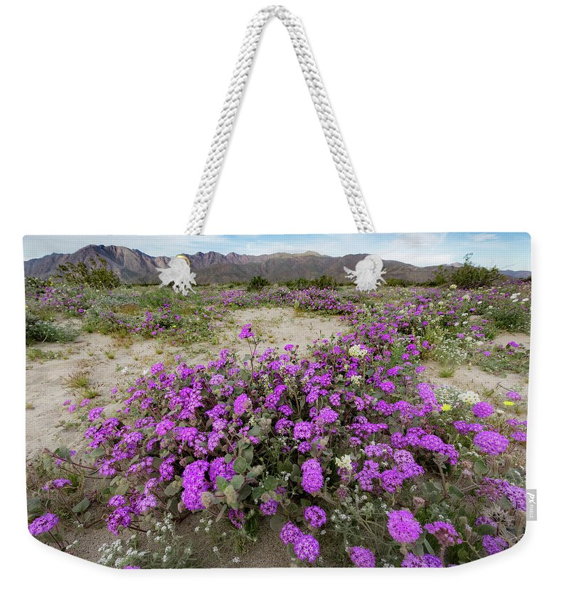 Spring Weekender Tote Bag featuring the photograph Spring In Anza by Susan Degginger