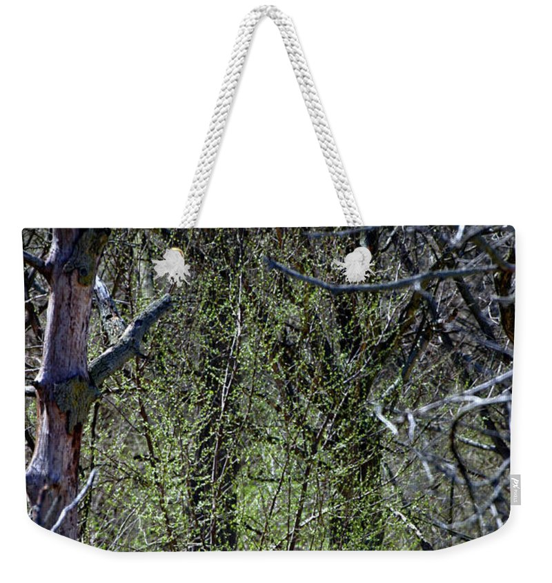 Background Weekender Tote Bag featuring the photograph Spring In The Timber by Alan Look