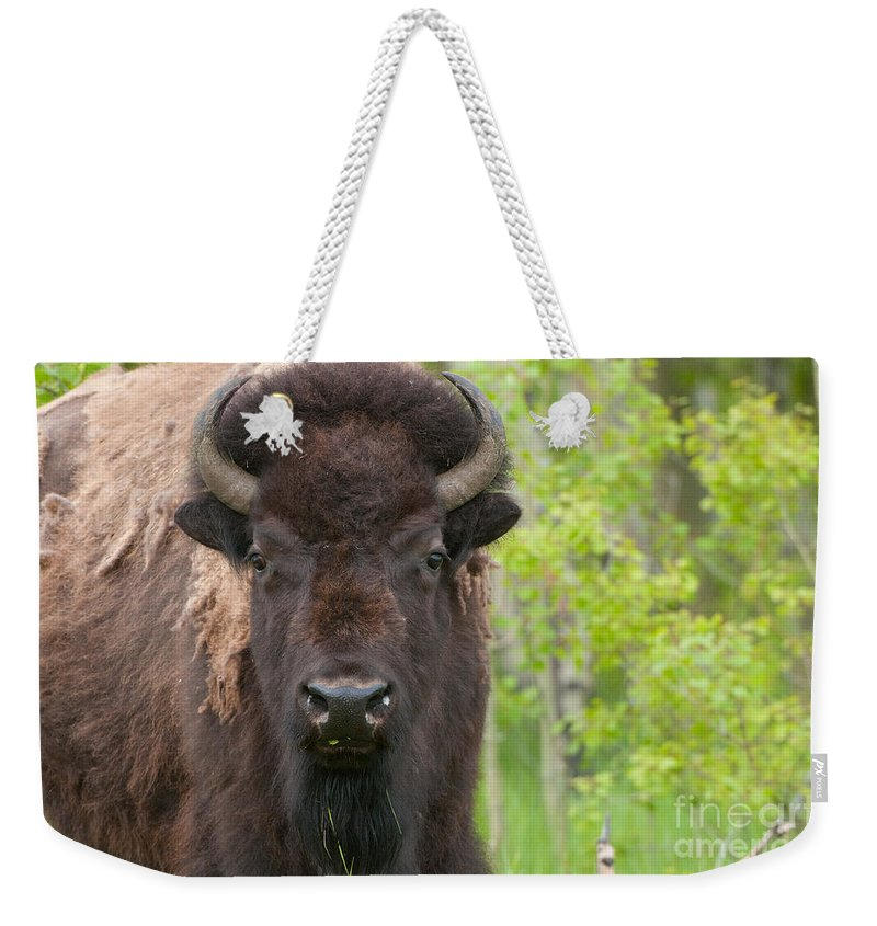 Grand Tetons Weekender Tote Bag featuring the photograph Spring Matriarch by Sandra Bronstein