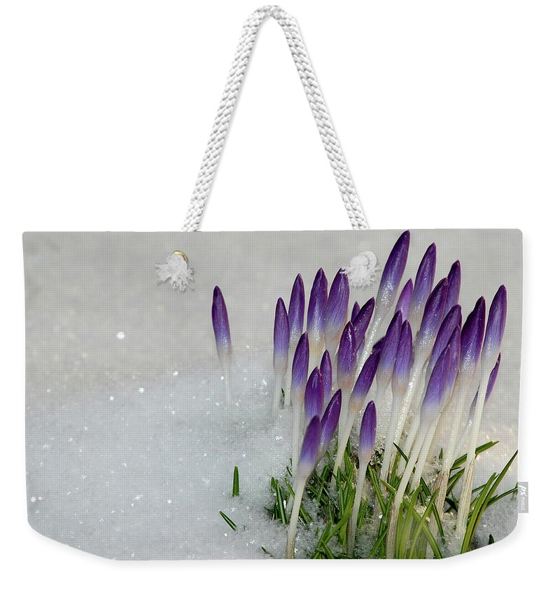 Spring Weekender Tote Bag featuring the photograph Spring Snow by Lisa Kane