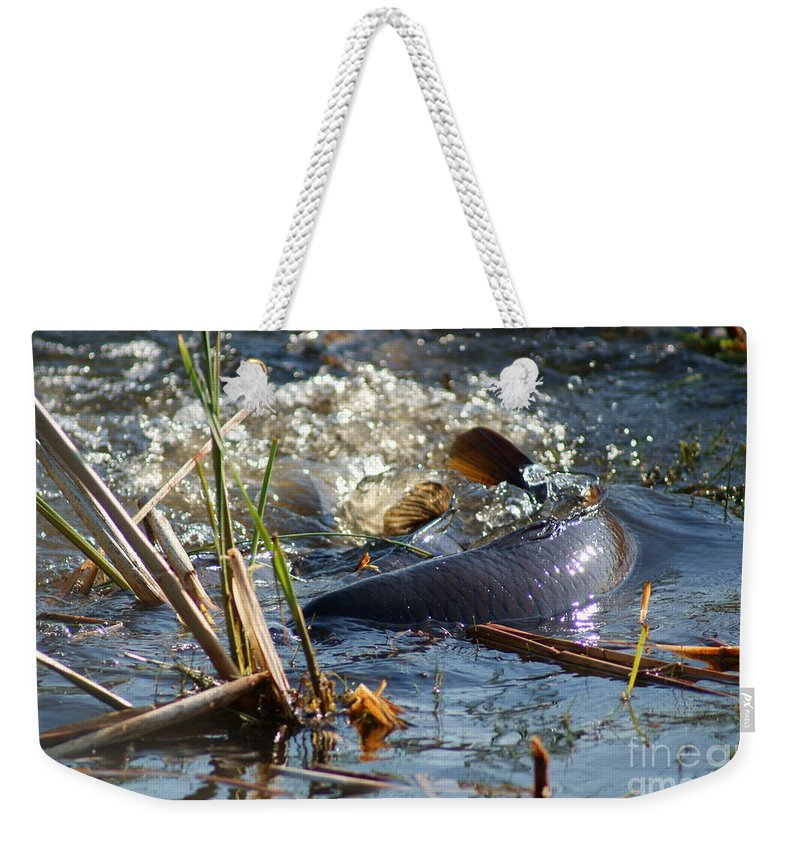 Carp Fish Spawning Weekender Tote Bag featuring the photograph Spring Spawn by Joanne Smoley