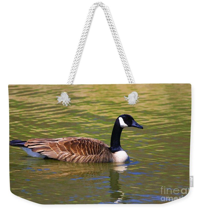 Bird Weekender Tote Bag featuring the photograph Spring Time Goose by Deborah Benoit