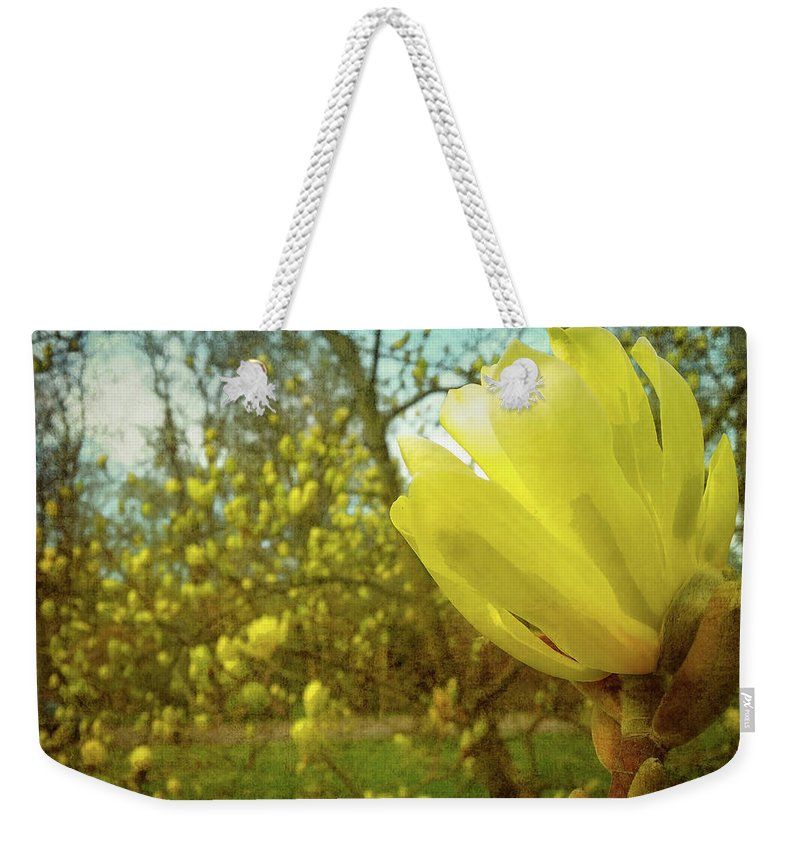 Gerlya Sunshine Weekender Tote Bag featuring the photograph Spring. Yellow Magnolia Flower by Gerlya Sunshine