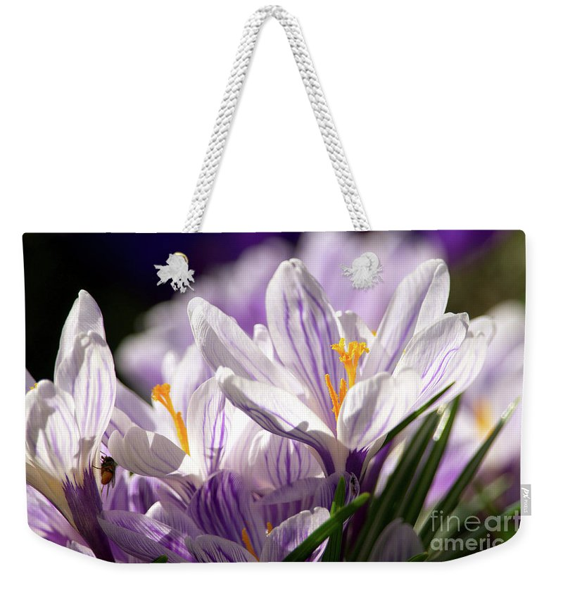 Crocus Weekender Tote Bag featuring the photograph Springtime Color by Sharon Talson